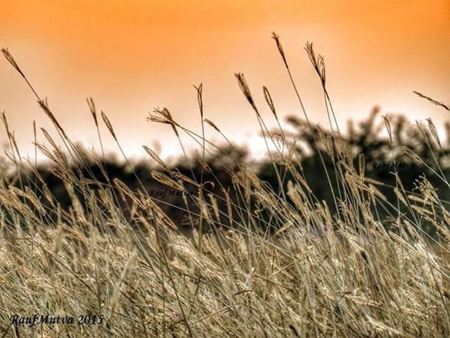 Meadow of Banni Banni Grassland January 2015 by RaufMutva Photography