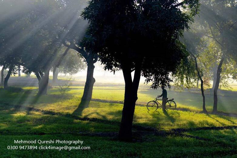 fog & light  by Mehmood Qureshi