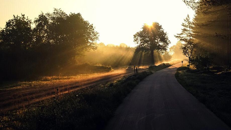 good morning sunshine by Diana Adina Visual Artist