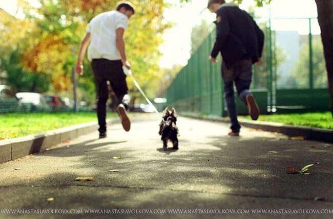 puppies by Anastasia Volkova Photography
